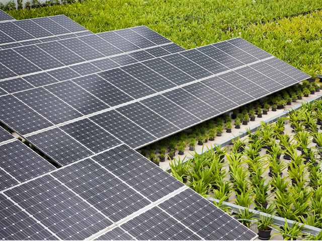 Solar Panels and Green Roof