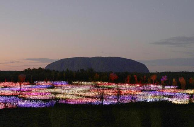 Field of light 1